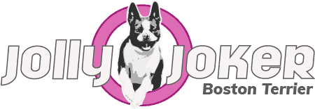 Jolly Joker – Boston Terrier Logo